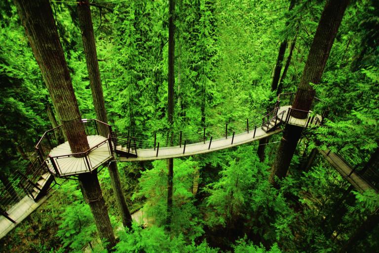 CAP_Treetops Adventure (3) at Capilano Suspension Bridge Park
